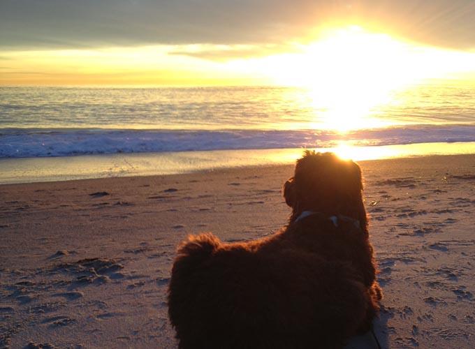 Dogs Who Brunch - LagunaBeachBest.com - Bindi at Beach