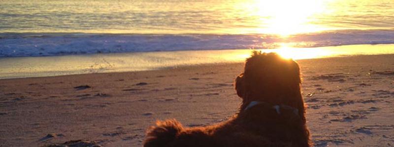 Dogs Who Brunch – Bindi, Laguna Beach