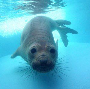 Pacific Marine Mammal Center - Laguna Beach's Best book