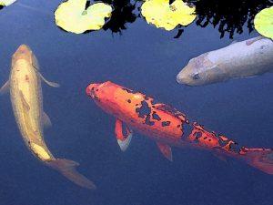 Wine & Painting Class - Koi Fish - Festival of Arts @ Festival of Arts | Laguna Beach | California | United States