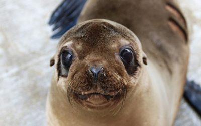 Support our Seals and Sea Lions With Holiday Gift Catalog