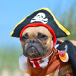 Spooktacular Paw-ty Options for Your Pets